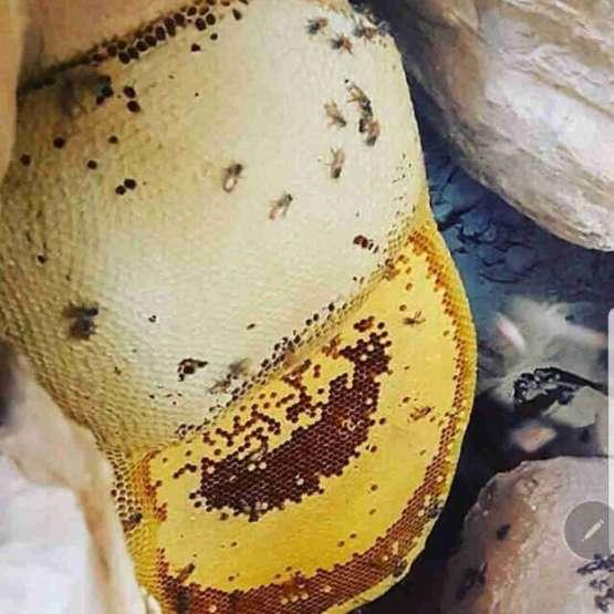 عسل طبیعی وحشی کوهی جنگلی ژله رویال روغن حیوانی