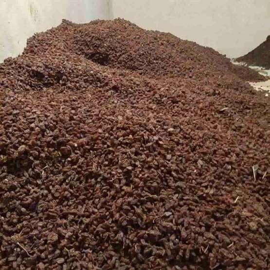مویز و شیره انگور شیراز