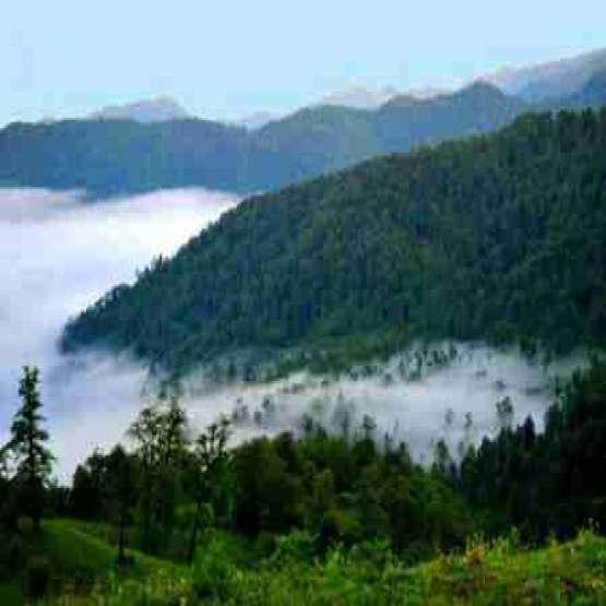 زمینی بکرو دست نخورده در دل جنگل