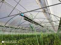 هیتر سقفی گازی گرماتاب گلخانه