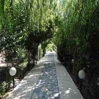 باغ 1249 متری با 6 درخت میوه 2ونیم وسه ساله