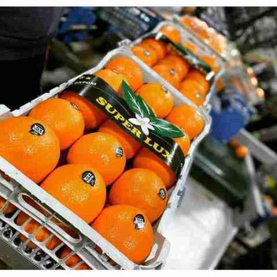 پرتغال تامسون درجه یک تناژ بالا محصولات صادراتی جویبار
