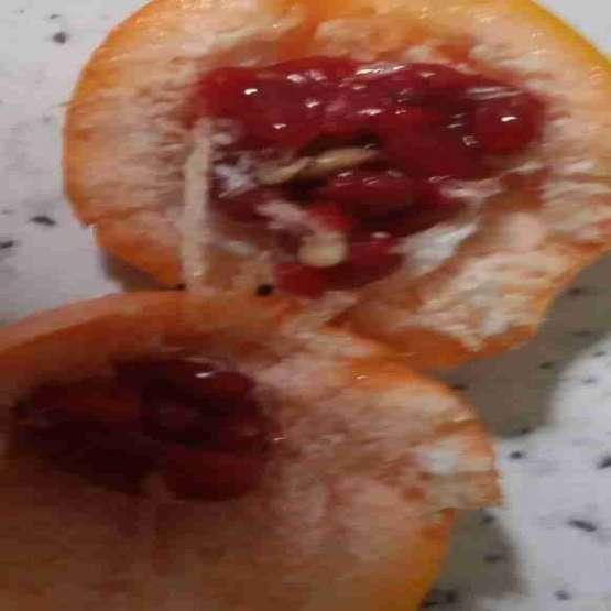 نهال پشن فروت نارنجی آمریکایی